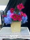Flower070729