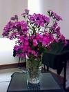 Flower080629