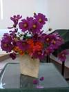 Flower081026